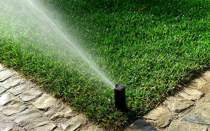 Watering Your Turf Grass